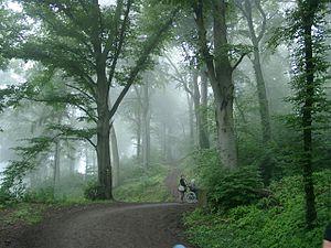 Der Heiligenberg im Nebel