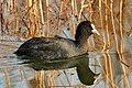High Contrast Bird (189012293).jpeg
