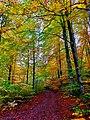 Hike trail in Hunneberg in autumn.jpg