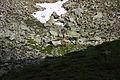 Hirsche fürstkar 1200 13-07-13.JPG