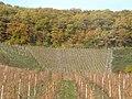 Hochgewachsenen Rebgarten, Hostert (Highest Vineyard) - geo.hlipp.de - 14659.jpg