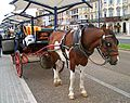 Horse and carriage yarmouth seafront.jpg