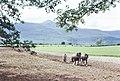 Horse drawn plough, Ring of Kerry (35623519404).jpg