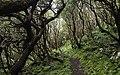 Ilha das Flores P5260075 (35877057561).jpg