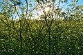 Iliynsky meadow 1469.jpg