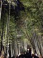 Illuminated Sagano bamboo forest 11.jpg