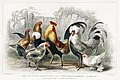 Illustration from A History of the Earth and Animated Nature by Oliver Goldsmith from rawpixel's own original edition of the publication 00055.jpg