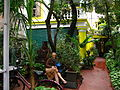 India - Pondicherry - 006 - lush entrance of the Coloniale Guesthouse (4180054802).jpg