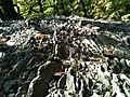 Interessante Steinoberflächen - panoramio.jpg