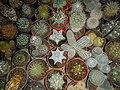"Iran-qom-Cactus-The greenhouse of the thorn world گلخانه کاکتوس ""دنیای خار"" در روستای مبارک آباد قم- ایران 49.jpg"