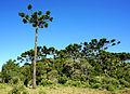 Itaimbezinho - Parque Nacional Aparados da Serra 21.JPG