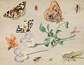 Jan van Kessel (I) Insekten.jpg