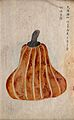 Japanese pumpkin (Cucurbita moschata); tear-drop shaped Wellcome V0043628ER.jpg
