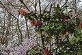 Japanse Tuin Hasselt - 05.jpg