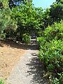 Jardín canario 90.JPG