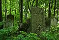 Jewish cemetery Jaroslaw 8.jpg