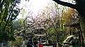 Jiashan, Jiaxing, Zhejiang, China - panoramio (51).jpg