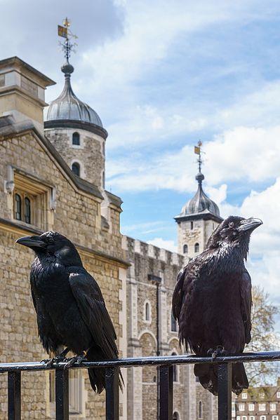 File:Jubilee and Munin, Ravens, Tower of London 2016-04-30 2.jpg