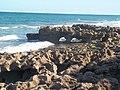Jupiter FL Coral Cove Park beach06.jpg
