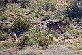 Karoo National Park 2014 36.jpg