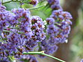 Kew Gardens - London - September 2008 (2955010623).jpg