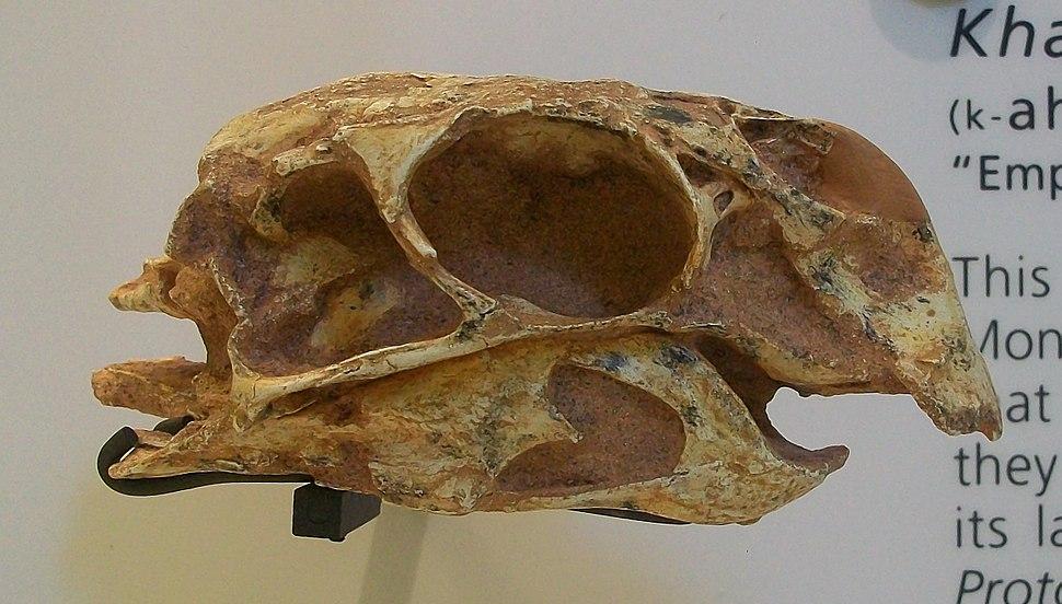 Khaan mckennai AMNH 29051 cast