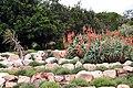 Kirstenbosch-006.jpg