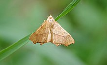 motýli při datování faktury po datování