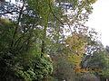 Kobe Municipal Arboretum in 2013-11-16 No,10.JPG