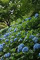 Kobe municipal forest botanical garden34n4272.jpg