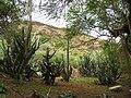 Koko Crater Botanical Garden - IMG 2219.JPG