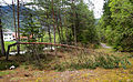 Kranjska Gora - fallen tree.jpg