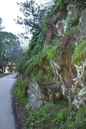 Lake Chabot Regional Park - Image: Lake Chabot Regional Park trail