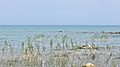 Lake Huron viewed from MacGregor Point Provincial Park 05.jpg