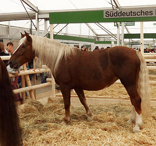 South German Coldblood Breed of draught horse from southern Germany