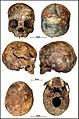 Lapa do Santo - Sepultamento 27 - Cranio.jpg