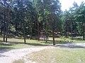 Las sosnowy w Bukownie - panoramio.jpg