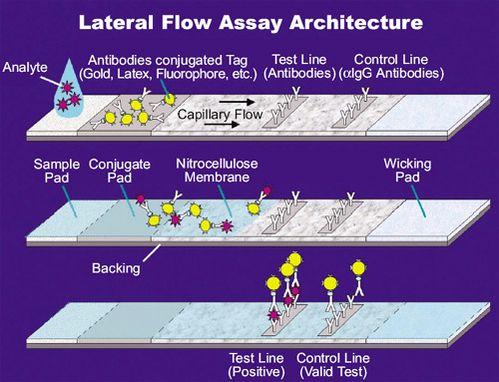 Figura 1: Los inmuno-ensayos de flujo lateral son dispositivos simples  que pueden detectar anticuerpos en la sangre