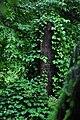 Laufen-Uhwiesen 2010-06-03 17-13-14.JPG