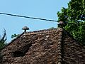 Le Change la Borde pigeonnier toit.JPG