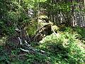 Les v kopci nad Úsobím (3).jpg