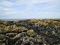 Lichen covered rocks on the north side of Porth Trefadog - geograph.org.uk - 1407212.jpg