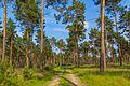 Lieberoser Heide 76.jpg