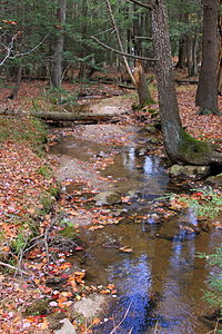 Little Crooked Run looking downstream.JPG