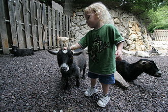 "Petting zoo - Child petting a domestic goat at the ""Little Kids"" Children's Zoo, St. Louis Zoo, St. Louis, Missouri, US."