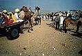 Local villagers arriving at the Pushkar Fair..jpg