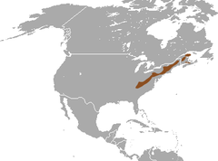Long-tailed Shrew area.png