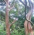 Love of Trees.jpg