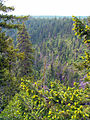 Lower White River Wilderness (8615219258).jpg