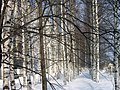 Lyovintsy, Kirovskaya oblast', Russia, 612079 - panoramio (134).jpg